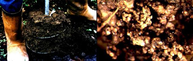 Extracción de humus y muestra de la textura